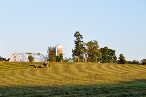 Farmer in field raking hay