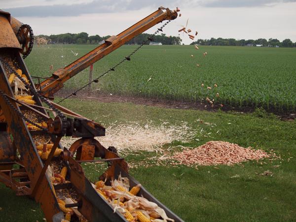 Shelling Corn