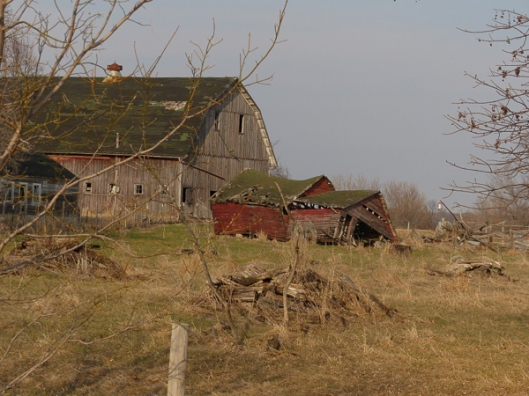 Old Barn with Grass Starting to Green