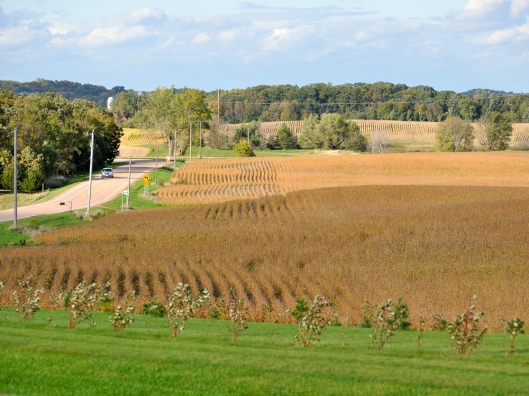 Hilltop View Carver County. County Road and soybean fields and rolling hills studded with trees can be seen.