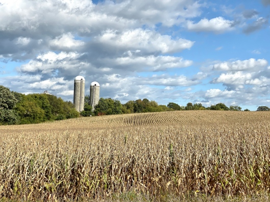 Carver county farm with twin silos cornfield foreground