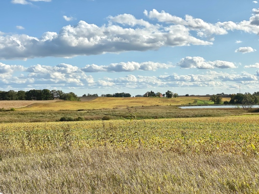 Rural landscape with rolling hills of soybeans and a slough bottom show promise of a good harvest and good hunting.